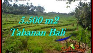 Beautiful 5,500 m2 LAND SALE IN TABANAN BALI TJTB280