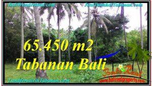 Magnificent LAND SALE IN Tabanan Selemadeg BALI TJTB290