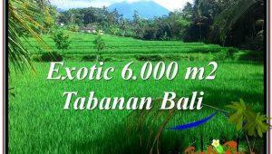 FOR SALE Affordable 6,000 m2 LAND IN TABANAN TJTB306