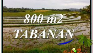 Magnificent PROPERTY 800 m2 LAND IN TABANAN BALI FOR SALE TJTB324