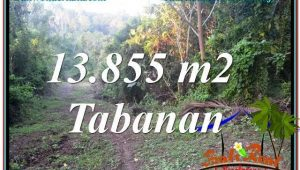 Affordable PROPERTY LAND FOR SALE IN TABANAN BALI TJTB335