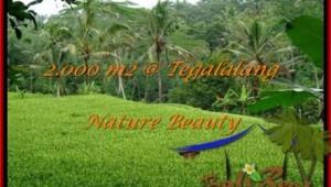 Exotic PROPERTY 2,000 m2 LAND SALE IN UBUD BALI TJUB490