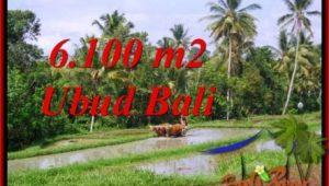 Affordable LAND SALE IN Ubud Tegalalang BALI TJUB552