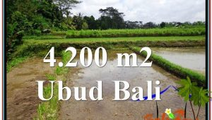 FOR SALE Exotic LAND IN Ubud Tampak Siring BALI TJUB561