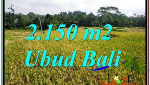 Exotic LAND SALE IN Ubud Tegalalang TJUB606