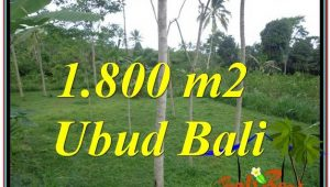 FOR SALE Magnificent 1,800 m2 LAND IN UBUD TJUB610