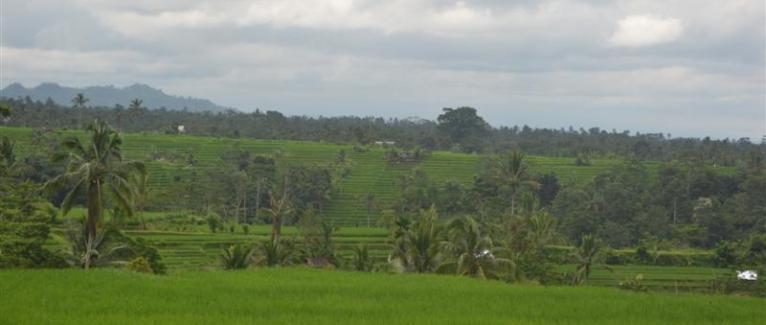 Land for sale in Bali 4,000 m2 in Tabanan Jatiluwih