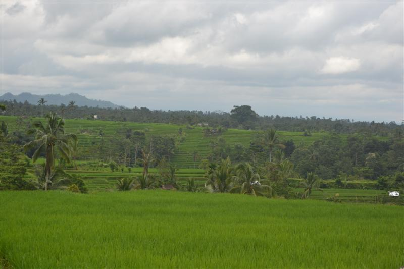 Land for sale in Bali 4,000 m2 in Tabanan Jatiluwih