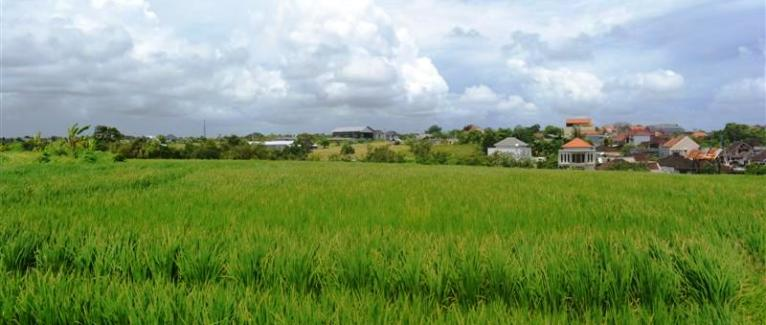 Land for sale in Canggu Bali 17.3 Ares with Rice fields and river view