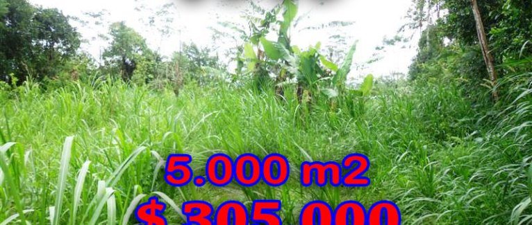 Land for sale in Bali 50 Ares in Ubud Tegalalang