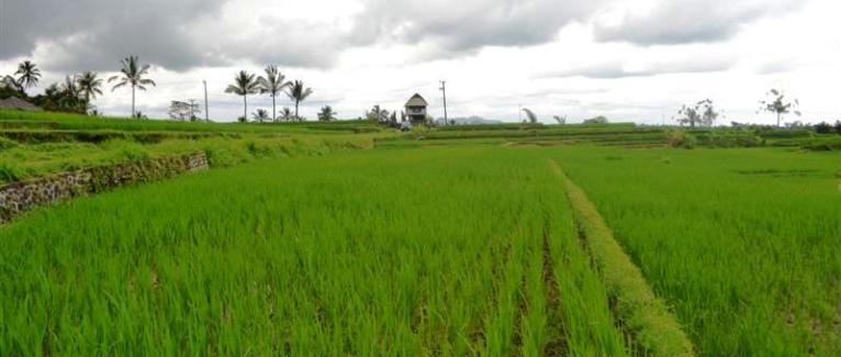 Land in Tabanan Bali For sale 3,500 sqm in Tabanan