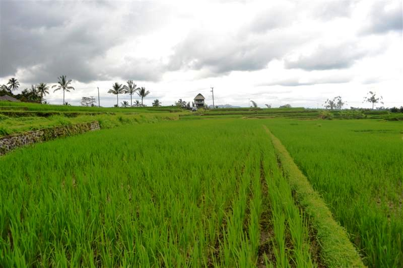 Land in Tabanan Bali For sale 3,500 sqm in Tabanan