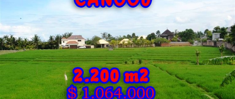 Stunning Property for sale in Bali, land for sale in Canggu Bali  – 2.200 sqm @ $ 483