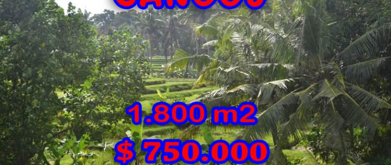 Exotic Land for sale in Bali Indonesia, Magnificent Paddy View in Canggu Berawa – TJCG111