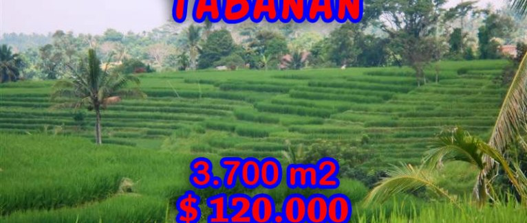 Land for sale in Bali, Magnificent view in Tabanan Penebel Bali – TJTB051