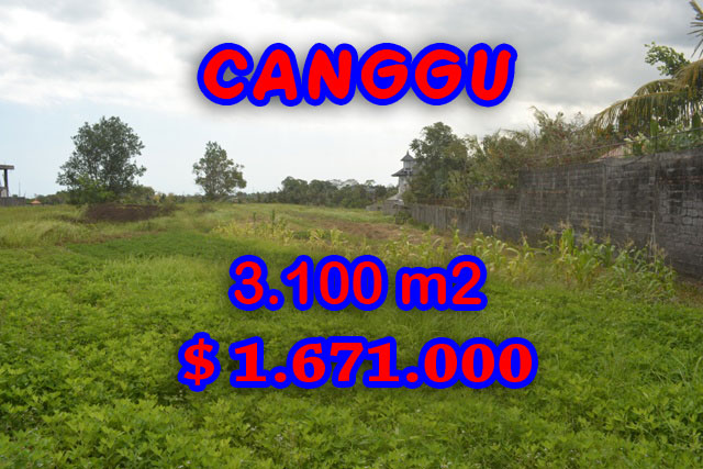 land in Bali for sale, Stunning view in Canggu Bali – TJCG120