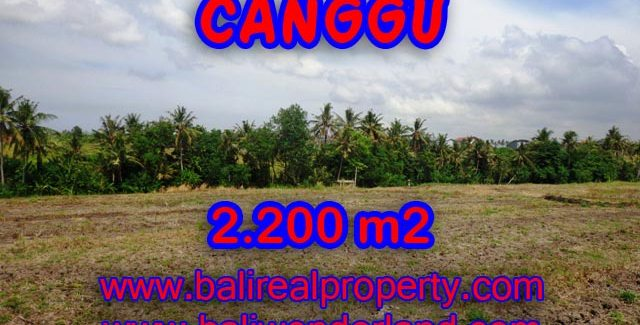 Land for sale in Bali, amazing view in Northern Canggu – TJCG128