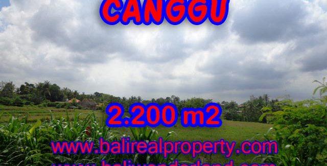 Amazing land in Bali for sale in Northern Canggu Bali – TJCG125