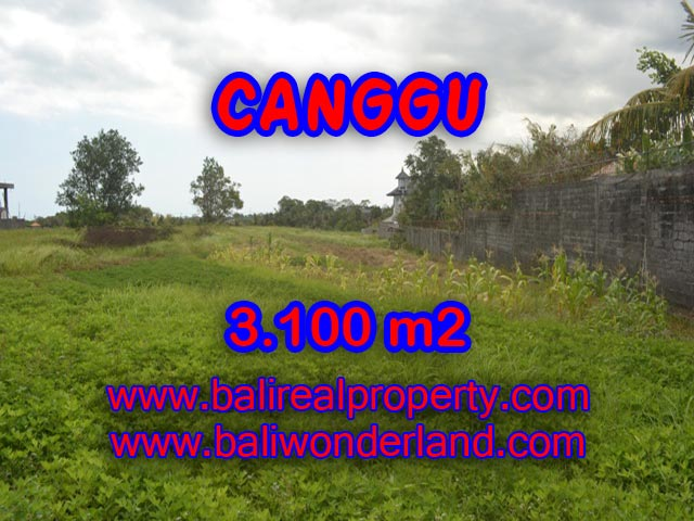Property for sale in Canggu Bali, Interesting land for sale in Canggu Batu Bolong  – 3,100 sqm @ $ 539