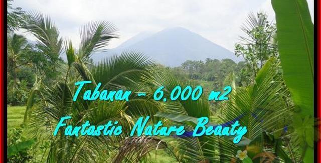 Beautiful 6.000 m2 LAND FOR SALE IN TABANAN BALI TJTB182