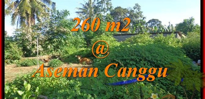 Magnificent LAND IN Canggu Brawa FOR SALE TJCG174