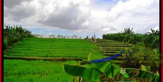 FOR SALE Magnificent PROPERTY LAND IN Canggu Pererenan TJCG141