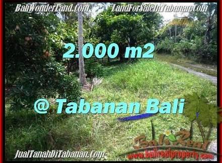 Affordable LAND IN Tabanan Selemadeg BALI FOR SALE TJTB206