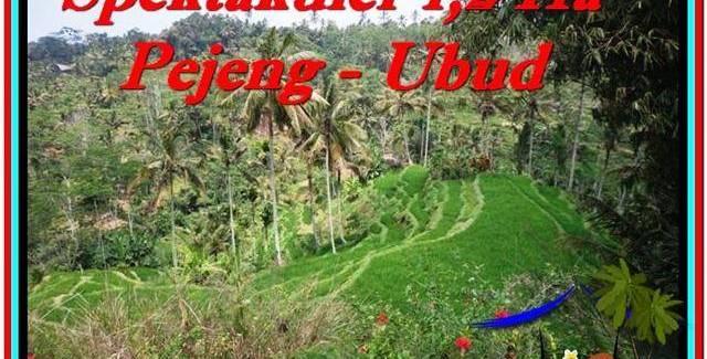 Affordable 12,000 m2 LAND FOR SALE IN UBUD BALI TJUB520