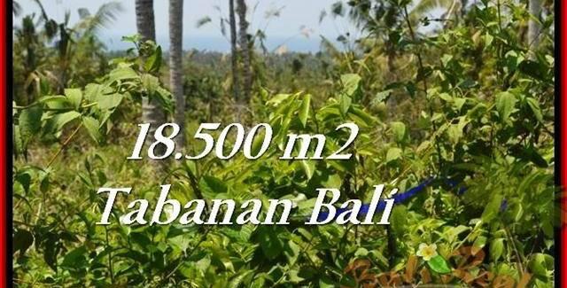 Beautiful PROPERTY LAND SALE IN TABANAN TJTB232