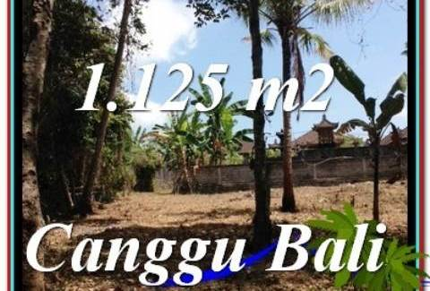 FOR SALE Affordable 1,125 m2 LAND IN Canggu Pererenan TJCG208