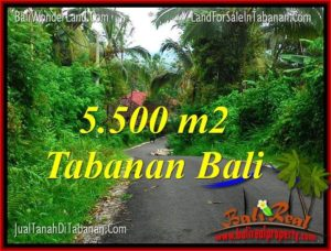 Beautiful PROPERTY 5,500 m2 LAND IN Tabanan Penebel BALI FOR SALE TJTB323