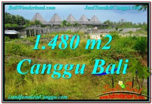 Affordable LAND IN Canggu Pererenan FOR SALE TJCG212