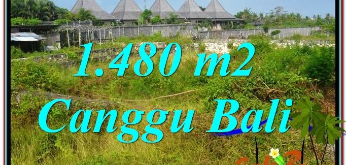 FOR SALE Magnificent PROPERTY 1,480 m2 LAND IN CANGGU TJCG212