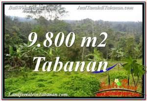 Beautiful 9,800 m2 LAND SALE IN Tabanan Selemadeg TJTB350