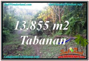 Affordable 13,855 m2 LAND FOR SALE IN Tabanan Selemadeg TJTB335