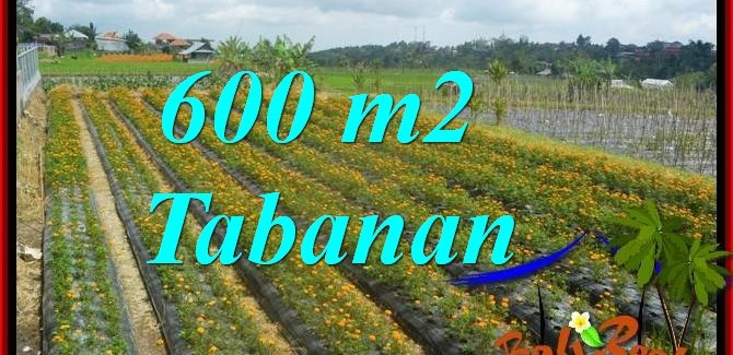 Magnificent PROPERTY 600 m2 LAND FOR SALE IN TABANAN Bedugul BALI TJTB372