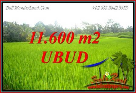 FOR sale Magnificent Property 11,600 m2 Land in Ubud Tegalalang TJUB732