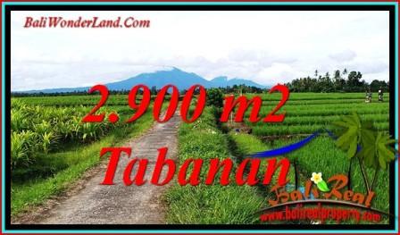 Beautiful PROPERTY LAND IN SELEMADEG BALI FOR SALE TJTB484