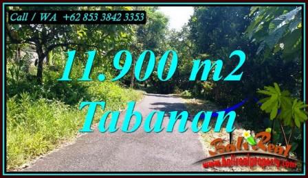 Magnificent SELEMADEG BARAT BALI 11,900 m2 LAND FOR SALE TJTB474
