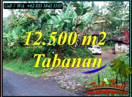 Magnificent 12,000 m2 LAND IN SELEMADEG BARAT BALI FOR SALE TJTB475