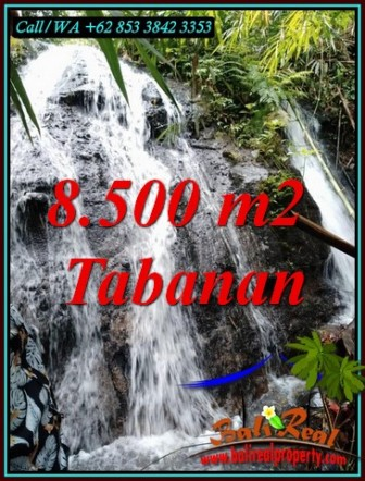 FOR SALE Affordable PROPERTY 8,500 m2 LAND IN SELEMADEG BALI TJTB478