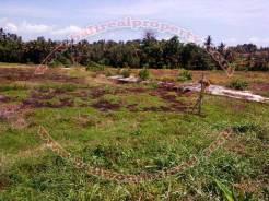 Dijual tanah ( Land for sale ) di Canggu Bali