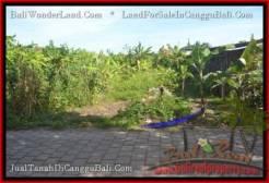 Exotic LAND SALE IN Canggu Pererenan TJCG182