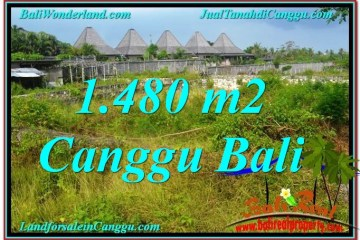 Beautiful LAND SALE IN Canggu Pererenan TJCG212