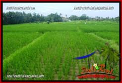 Affordable PROPERTY LAND IN Canggu Pererenan BALI FOR SALE TJCG219