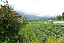 TJTB061 land for sale in Bedugul Tabanan Bali 03