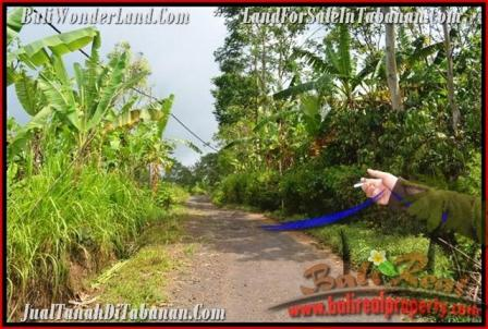 Affordable 51,100 m2 LAND IN TABANAN BALI FOR SALE TJTB166