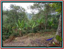 Beautiful PROPERTY 8.100 m2 LAND SALE IN Tabanan Penebel TJTB212