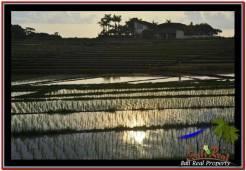 Beautiful LAND IN TABANAN FOR SALE TJTB248