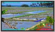 FOR SALE Affordable PROPERTY 11,450 m2 LAND IN TABANAN BALI TJTB291